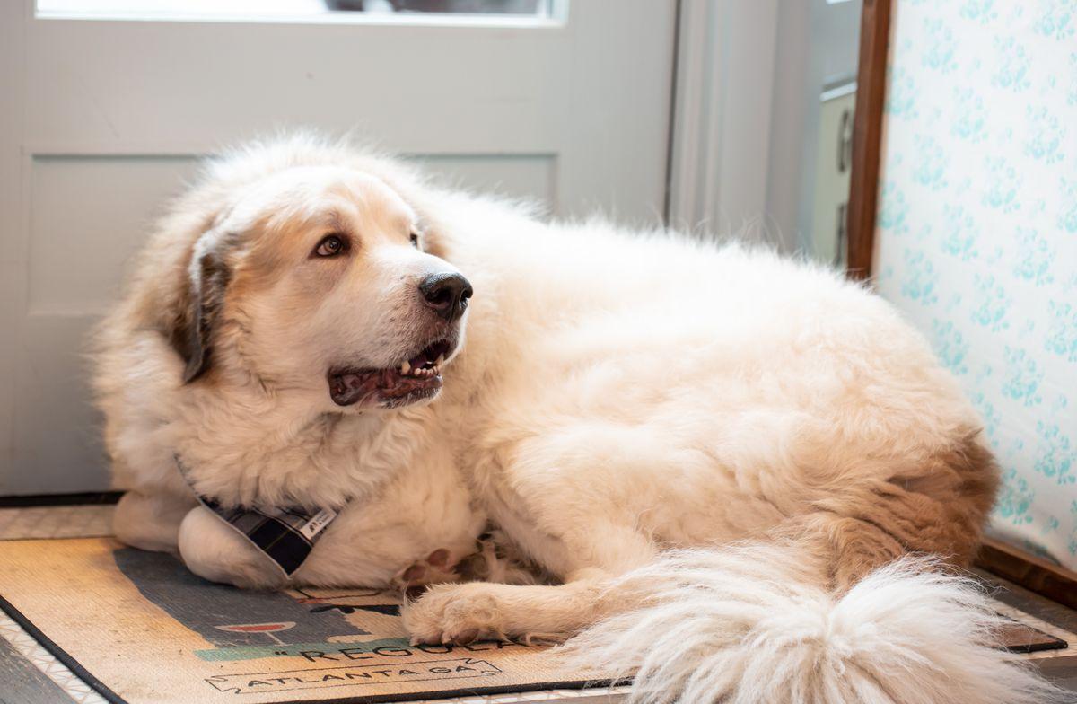 Fernando the Dog lying on the door map at Little Bear in Summerhill Atlanta