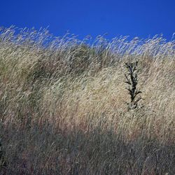 Dry grass blows in the wind near Mountain Dell on Tuesday, June 25, 2013. Utah is facing drought conditions this summer.