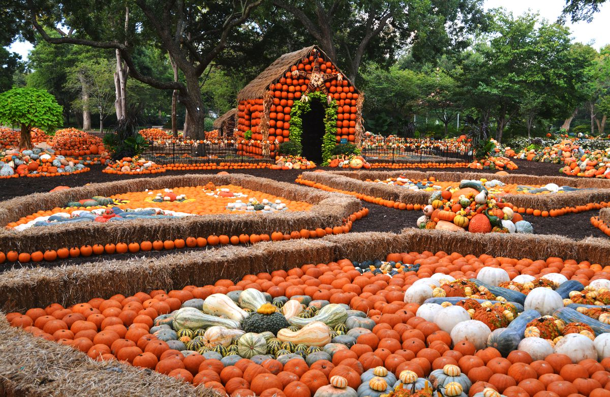 The Pumpkin Village at the Dallas Arboretum and Botanical Garden. There are many assorted pumpkins on display. There is a house with pumpkins on its outer walls.