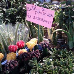 """Colorful cactuses are a delightful holiday gift just be sure to ask for assistance because """"OUCH!"""" those prickles can hurt. 3.For the tech savvy youngster in your life Argyle St. gift shops provide you with plenty of options of iPhone cases adorned with H"""