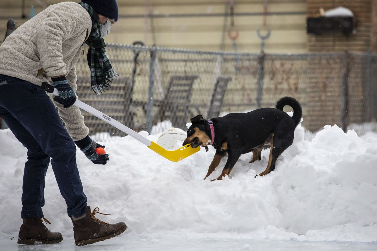 Jeremy Gordon, 41, plays with his puppy Rosie, a 9-month-old shepherd mix, on the homemade ice skating rink in his backyard at the family's west suburban Oak Park home Thursday.