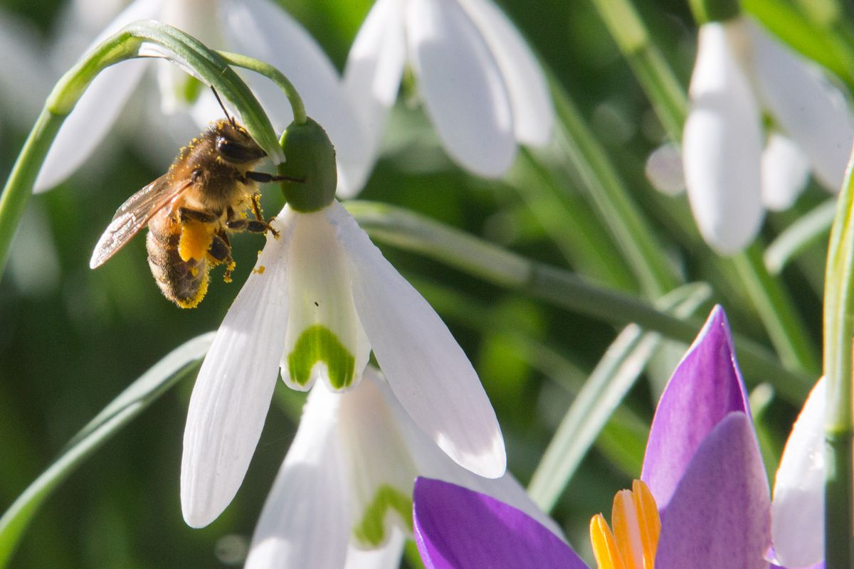 Norway S Capital City Is Building A Highway For Bees The