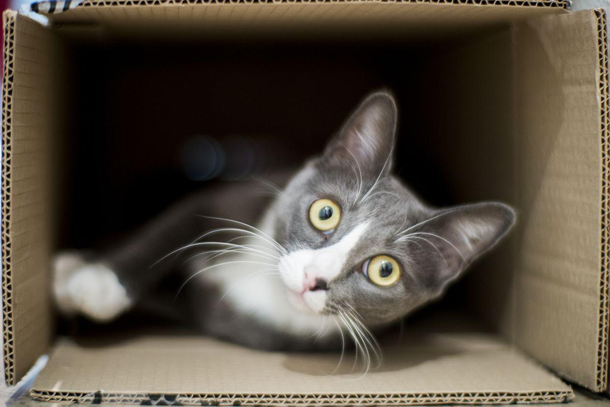 Cat inside a cardboard box.