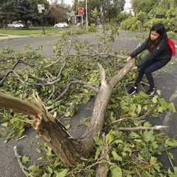 Olivia Babcock pulls a branch from the street after wind toppled trees in Salt Lake City on Tuesday, Sept. 8, 2020.