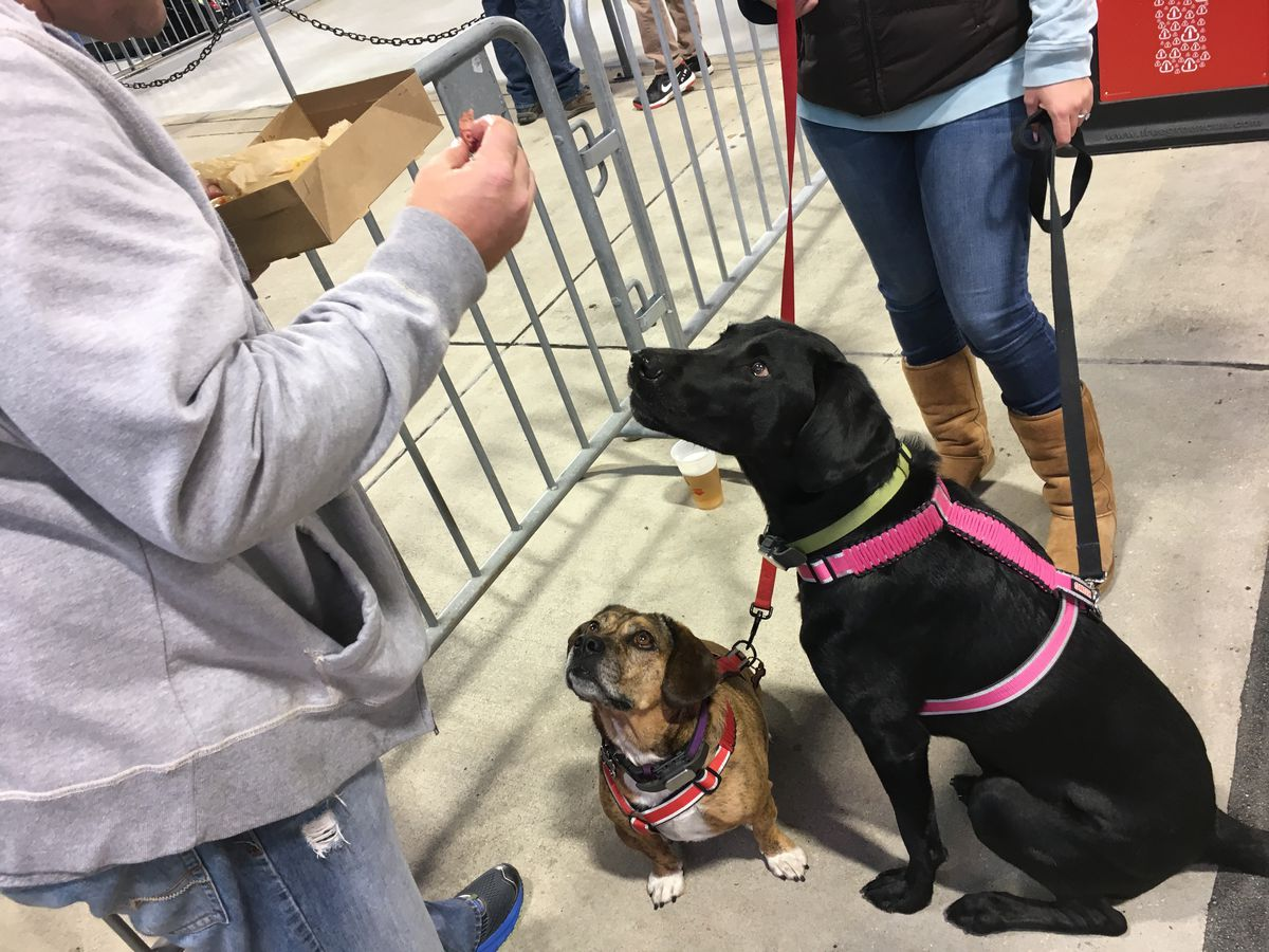Lucy, a black lab, and Dixie, an English bulldog-beagle mix, patiently wait for their owner to share a hot dog with them.   Madeline Kenney/Sun-Times