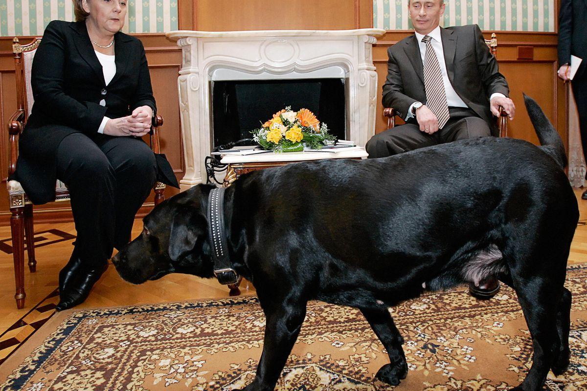 Russian President Vladimir Putin surprises German Chancellor Angela Merkel with his pet dog in 2007 in Sochi