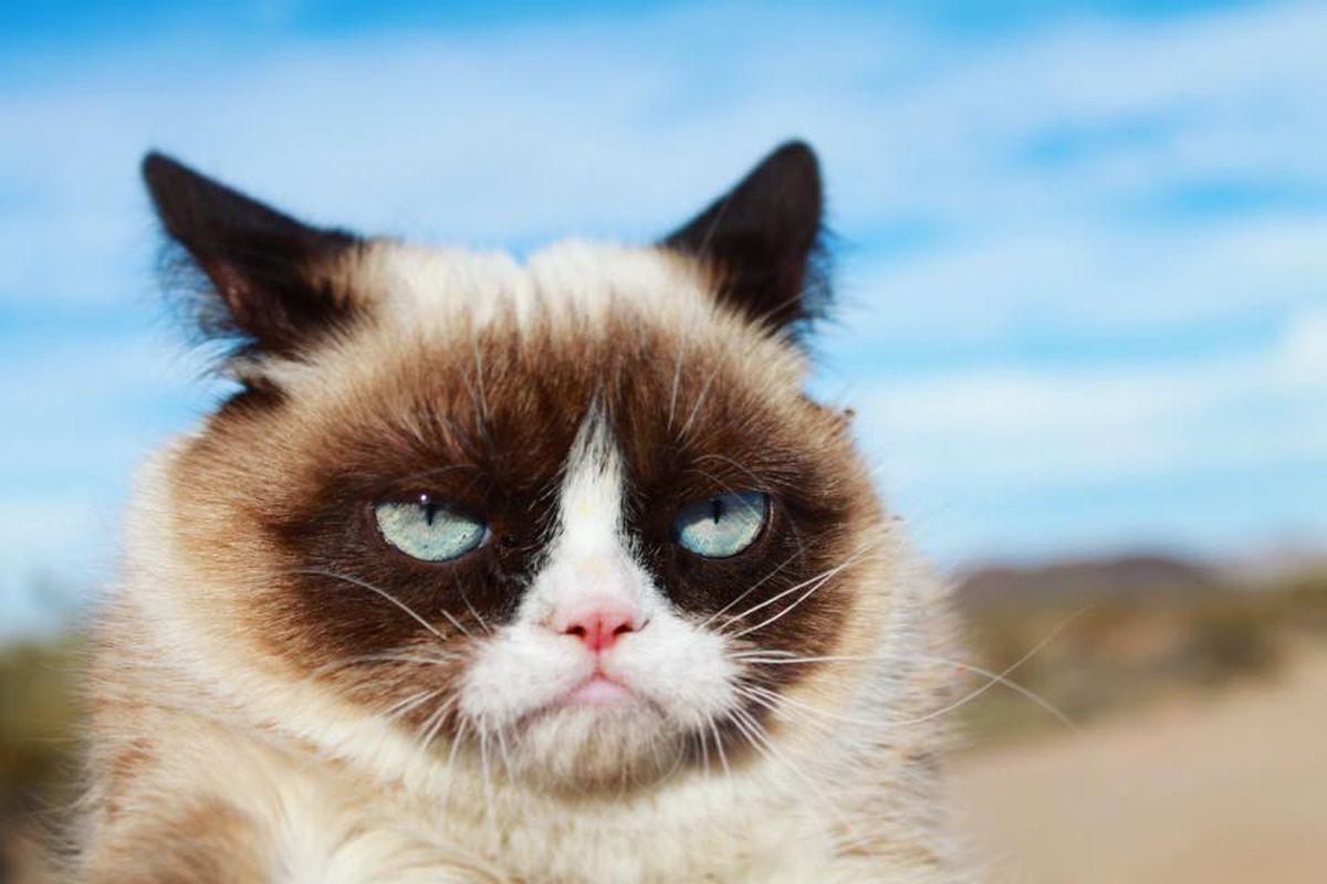 Grumpy Cat, beloved internet star, dies at age 7 - Chicago ...