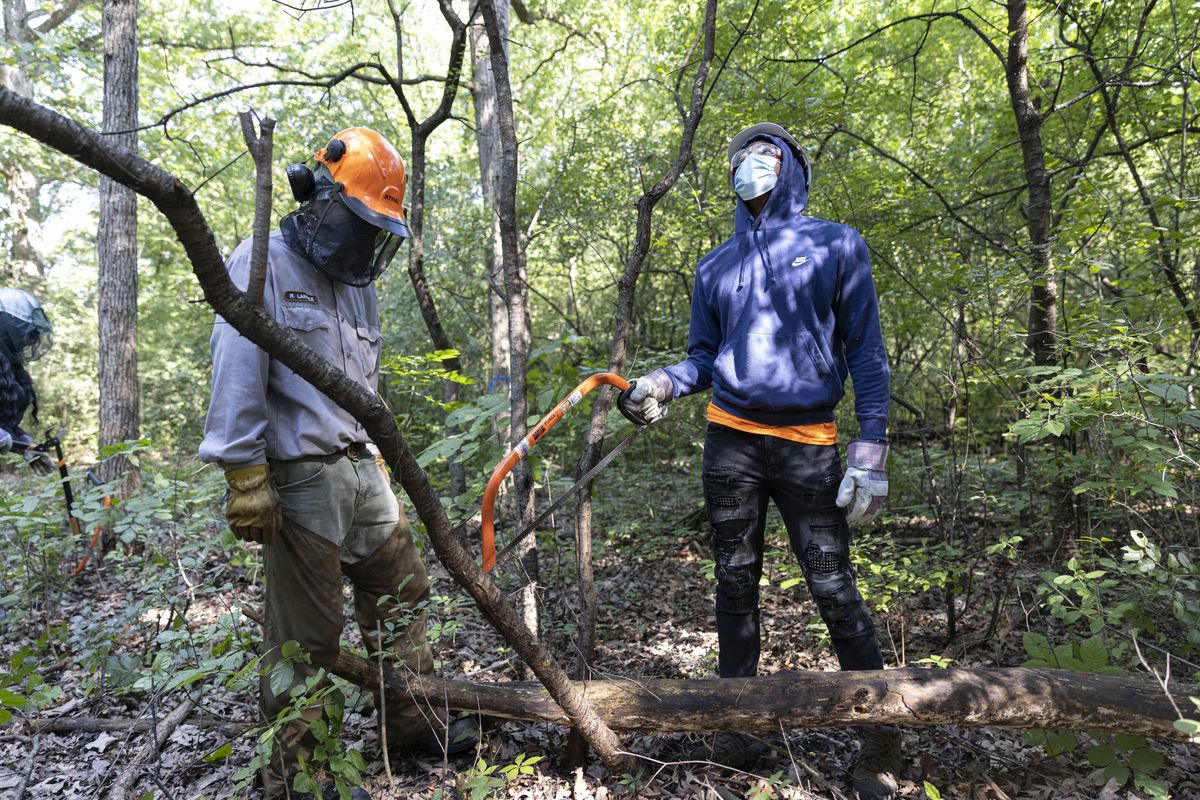 Tramaine Davis, 17, right, looks up to inspect a tree in order to cut and clear the invasive species of plants and small trees as part of the Forest Preserve Experience at the Possum Hollow Woods Forest Preserve in La Grange Park.