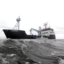In this Sept. 7, 2012, photo, the research vessel Ocearch has set her anchor as the crew begins their search for great white sharks on the Atlantic Ocean, spending two to three weeks tagging sharks and collecting blood and tissue samples off the coast of Chatham, Mass.  The Ocearch team baits the fish and leads them onto a lift, tagging and taking blood, tissue and semen samples up close from the world's most feared predator. The real-time satellite tag tracks the shark each time its dorsal fin breaks the surface, plotting its location on a map.
