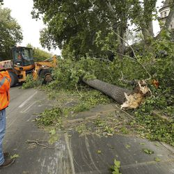 Crews remove downed trees at the Governor's Mansion in Salt Lake City on Tuesday, Sept. 8, 2020, after they were toppled by high winds.