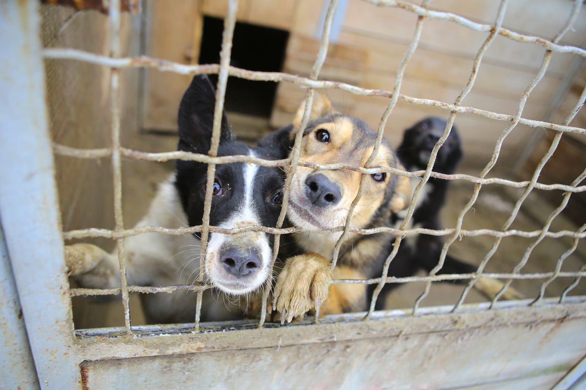 FILE - City officials in northern Utah say they'll meet with residents concerned about animal welfare after a split with the local Humane Society left the city of Logan without an animal shelter.