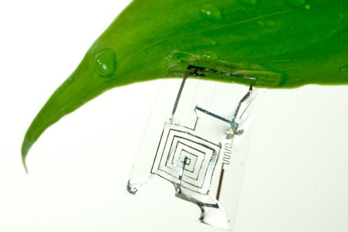 Biodegradable circuit board