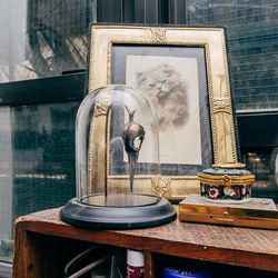 """This is an old brass bird skull in a bell jar and a photograph of a cat titled """"Sweety"""" at the bottom, dated 1911."""