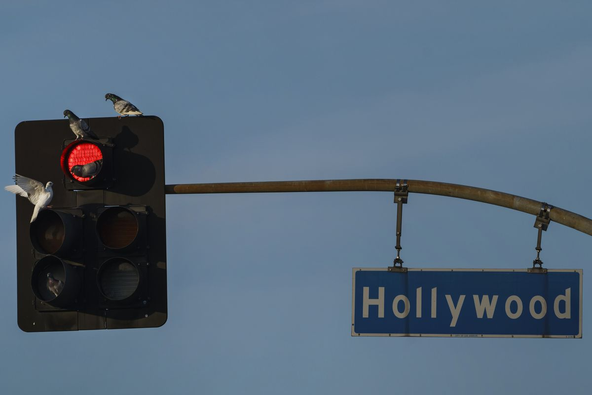 Pigeons gather on a red light on Hollywood Blvd., in Los Angeles Tuesday, Jan. 5, 2021. Los Angeles is the epicenter of California's surge that is expected to get worse in coming weeks when another spike is expected after people traveled or gathered for Christmas and New Year's.