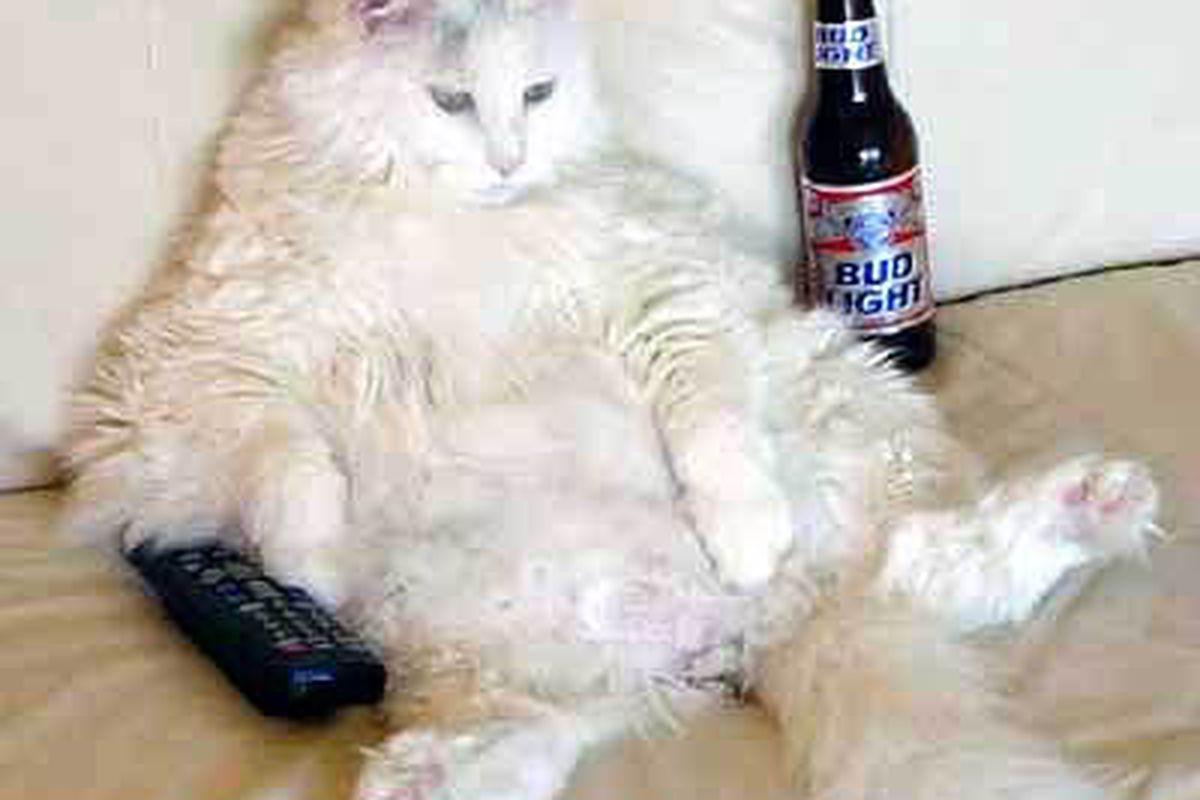"""via <a href=""""http://4.bp.blogspot.com/_OtBEp3z_0Ww/Sj2o-evnrCI/AAAAAAAAAP8/MJH8ZvHl0yQ/s400/lazy_cat.jpg"""">4.bp.blogspot.com</a>"""