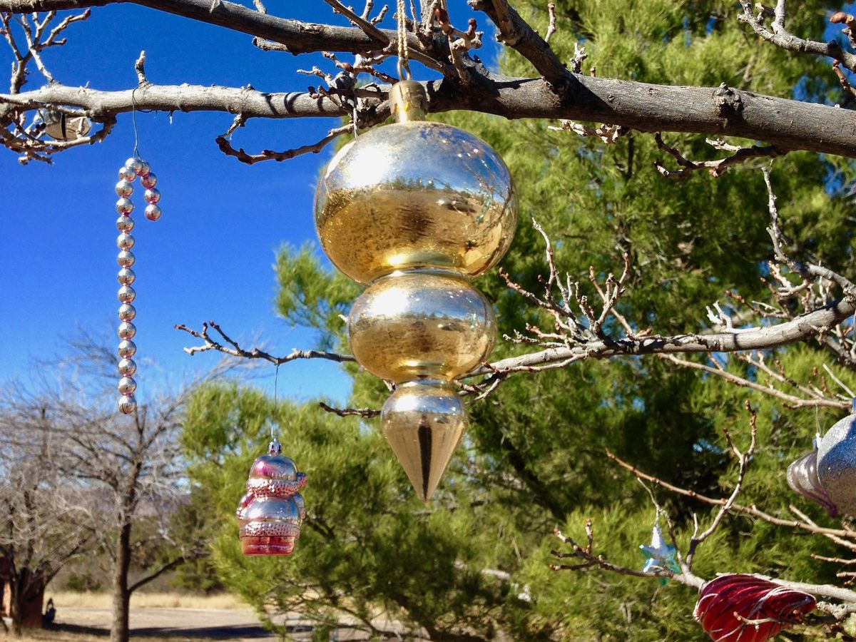 Elgin Christmas Tree Farm.Best Christmas Tree Farms In And Around Austin Curbed Austin