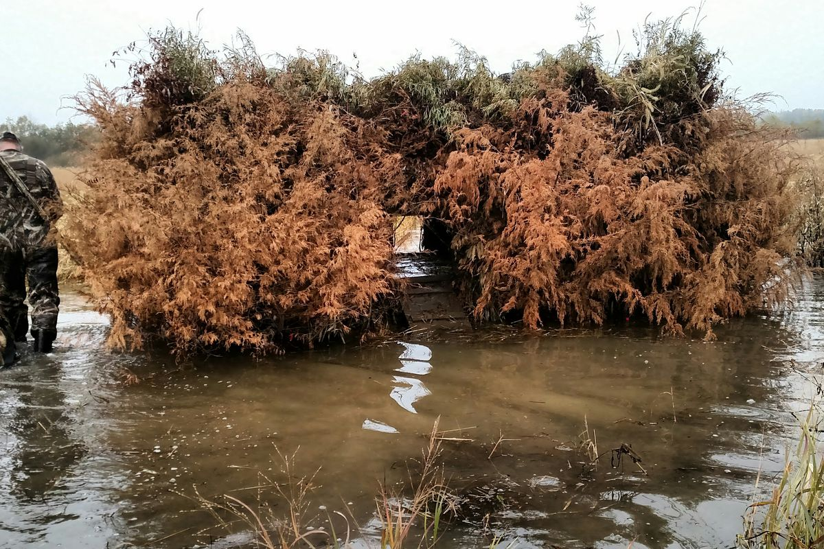 File photo of a waterfowl hunting blind at Spring Lake SFWA. Credit: Dale Bowman