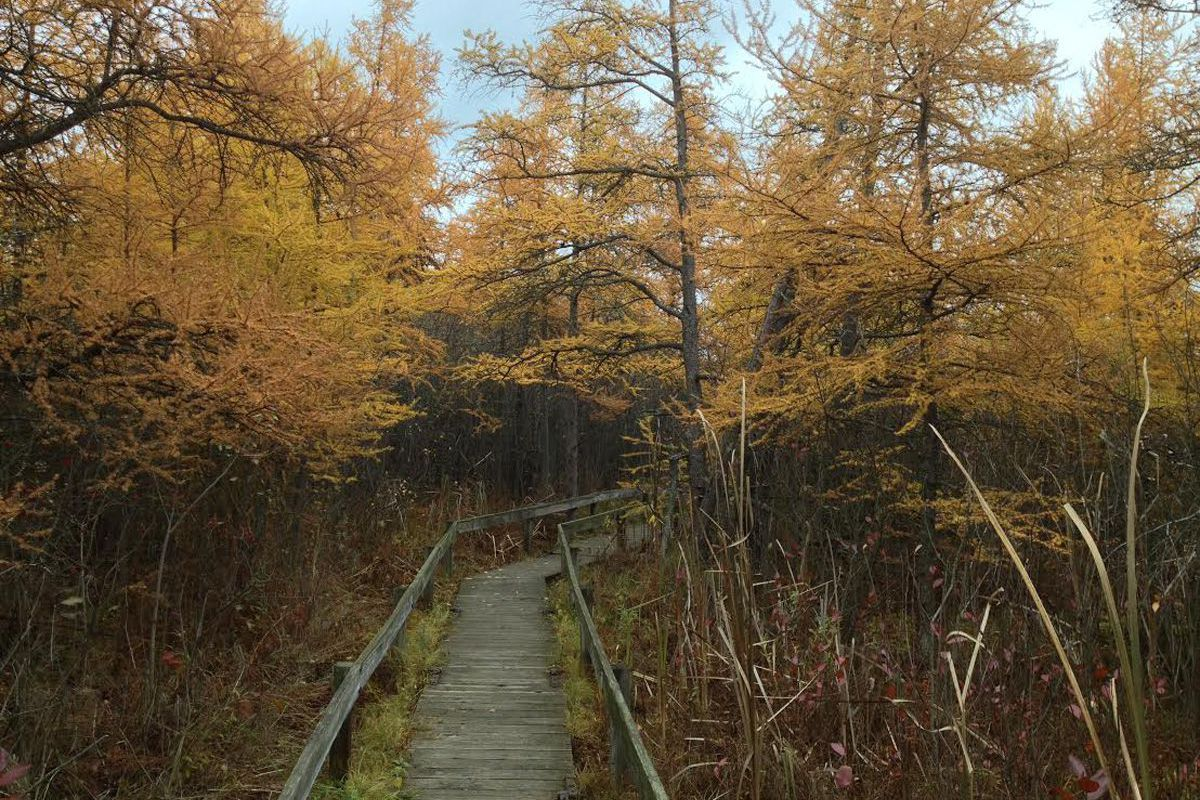 Illinois' natural wonders are well worth preserving