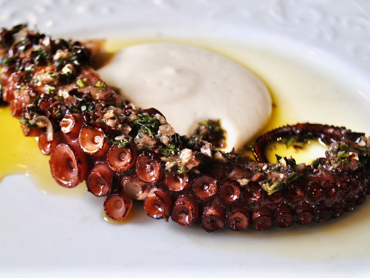 A curled leg of grilled octopus laid over a white sauce on a white plate