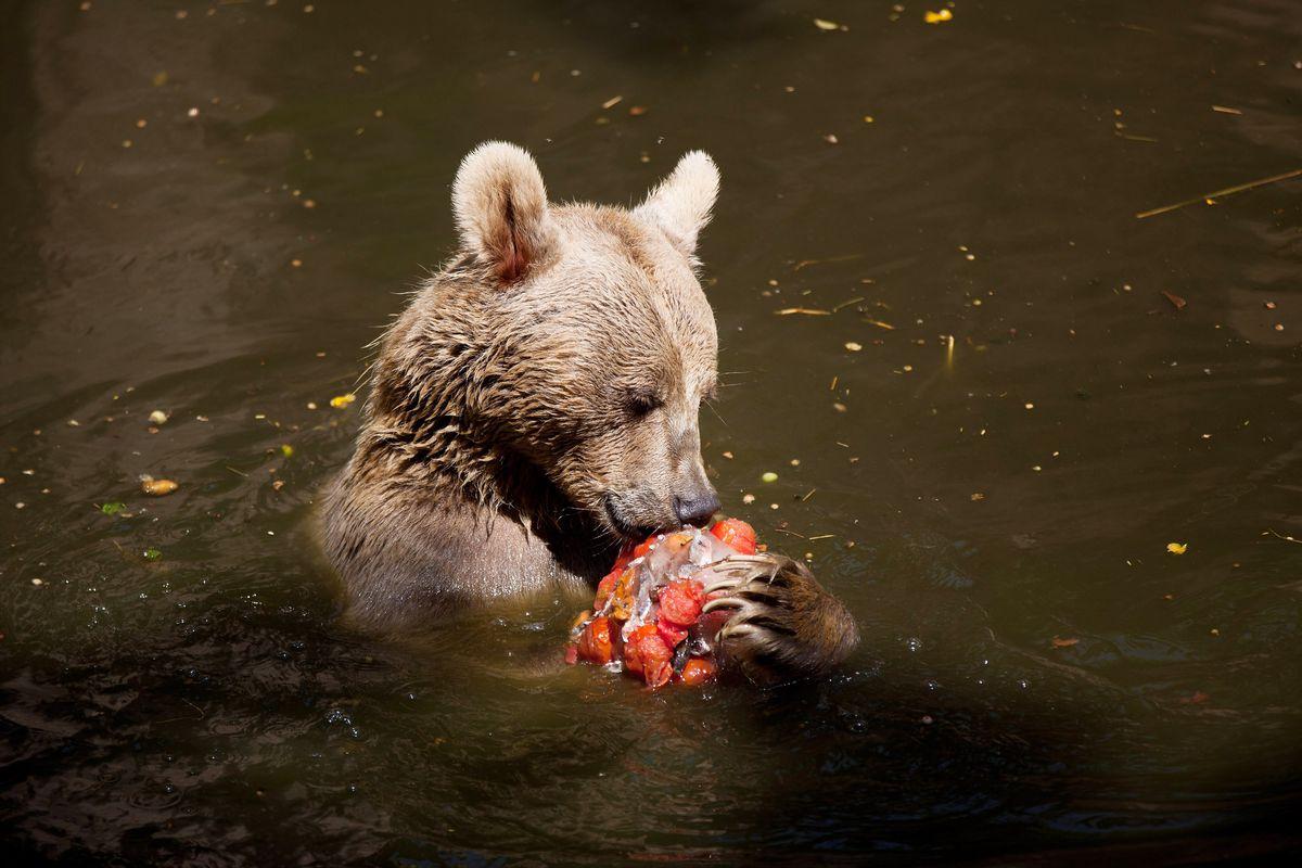 Zoo Feeds Animals Fruit In Ice To Combat Heat