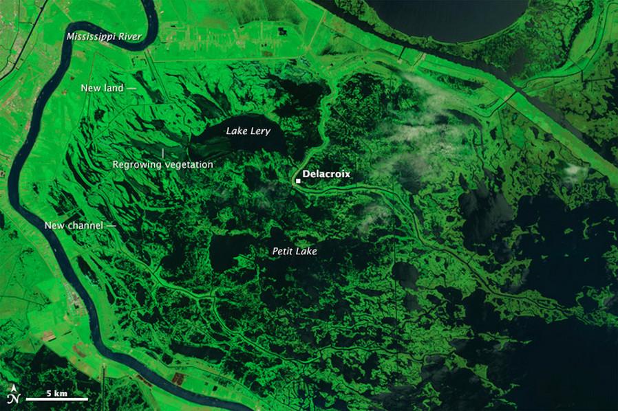 Swamp areas in Louisiana 10 years after Katrina.