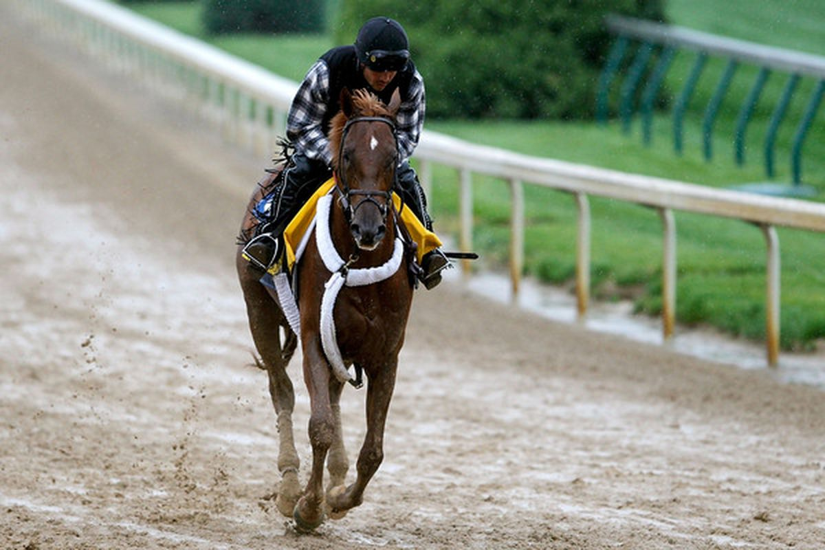 LOUISVILLE, KY - APRIL 27:  Kentucky Derby entrant Ice Box, trained by Nick Zito, during morning exercise at Churchill Downs on April 27, 2010 in Louisville, Kentucky.  (Photo by Matthew Stockman/Getty Images)