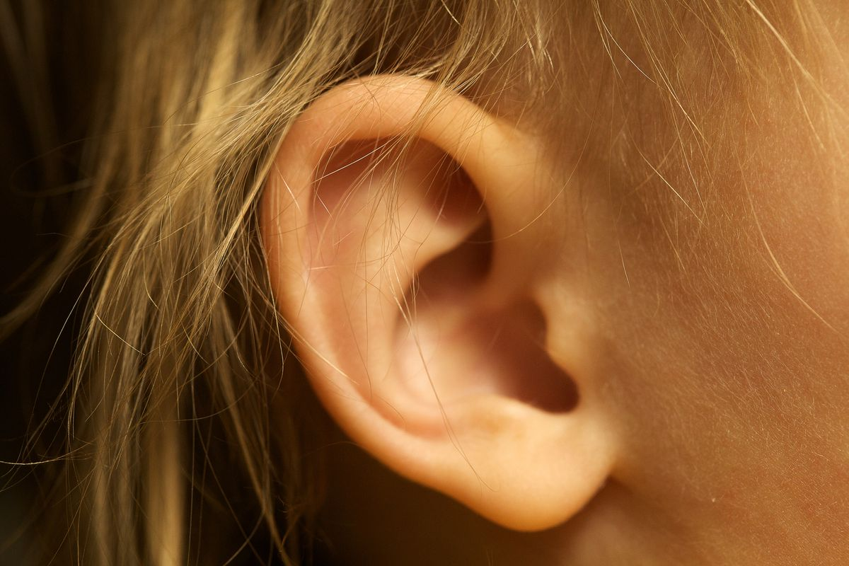 Gene therapy could help auditory nerves regrow