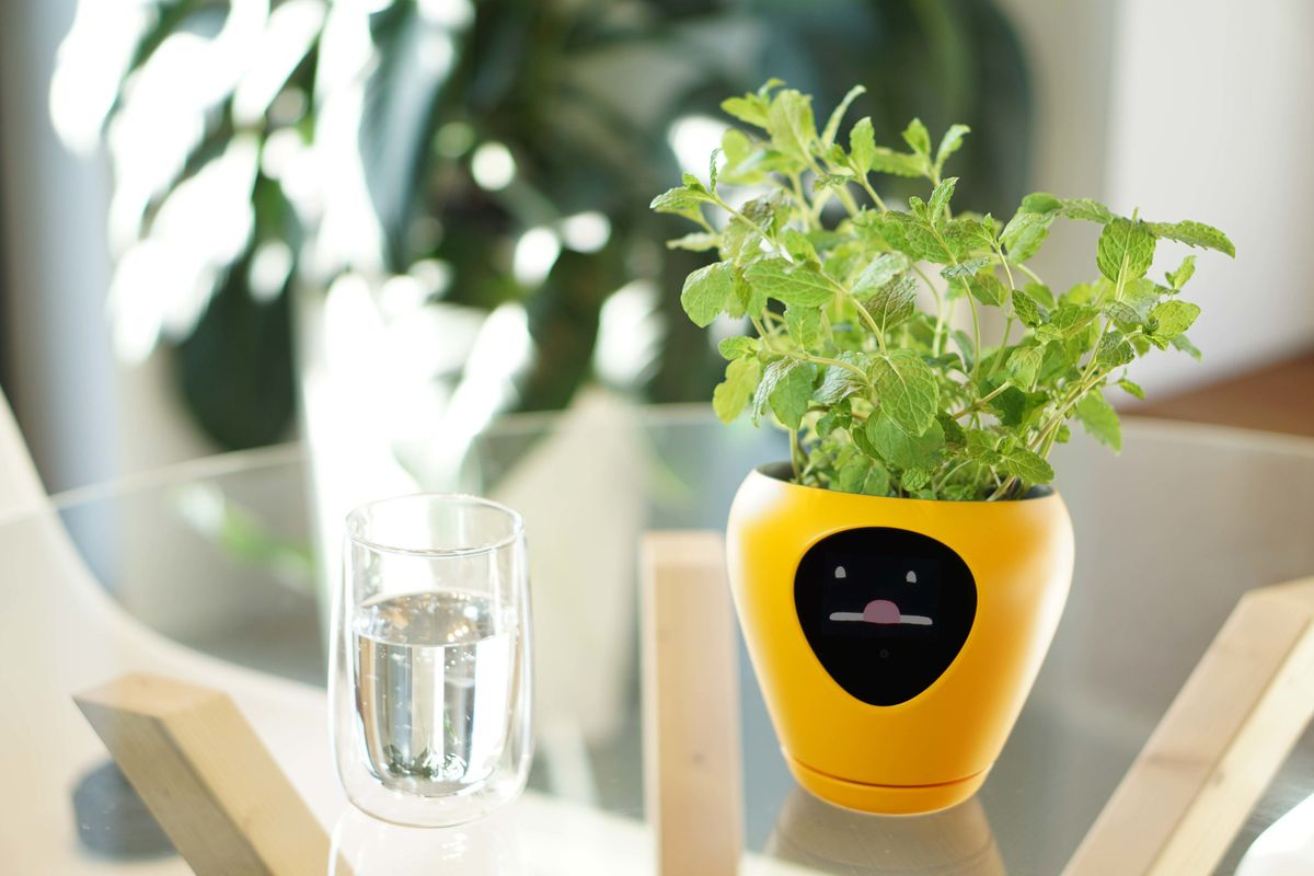 Smart planter Lua has a screen that displays your plant's