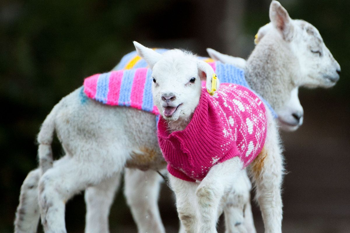 Which Of These Adorable Animals In Sweaters Is Your
