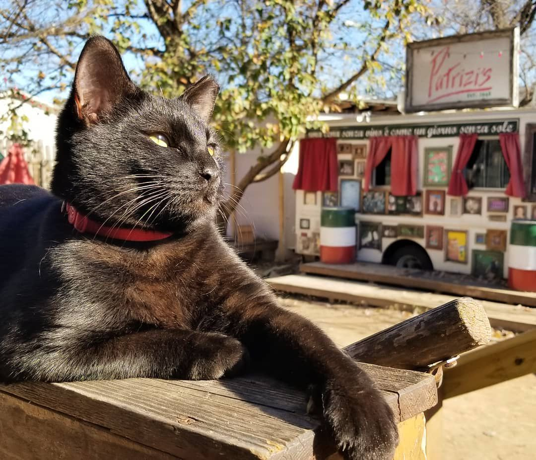 """A black cat sitting on a wooden table outside with a food truck with a sign noting """"Patrizi's"""" in the background"""