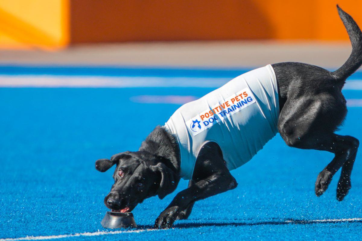 Boise State's tee-fetching dog: Adorable tradition goes back decades