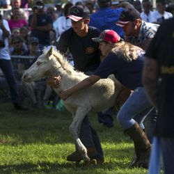 Youth handlers move a wild pony foal around the ring during the Pony Penning Auction at the fairgrounds in Chincoteague, Va., on Thursday, July 25, 2019.
