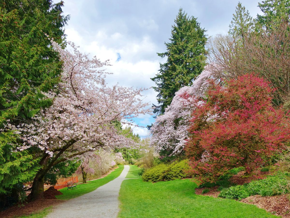 A paved path runs forward through a green lawn, with cherry trees and evergreen trees lining it on either side.