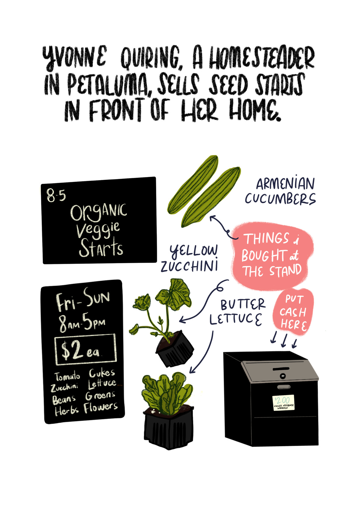 """""""Yvonne Quiring, a homesteader in Petaluma, sells seed starts in front of her home."""" [Below are illustrations of Armenian cucumbers, yellow zucchini, and butter lettuce, along with a black cash box and a sign advertising the farm stand's days, hours, and produce menu.]"""