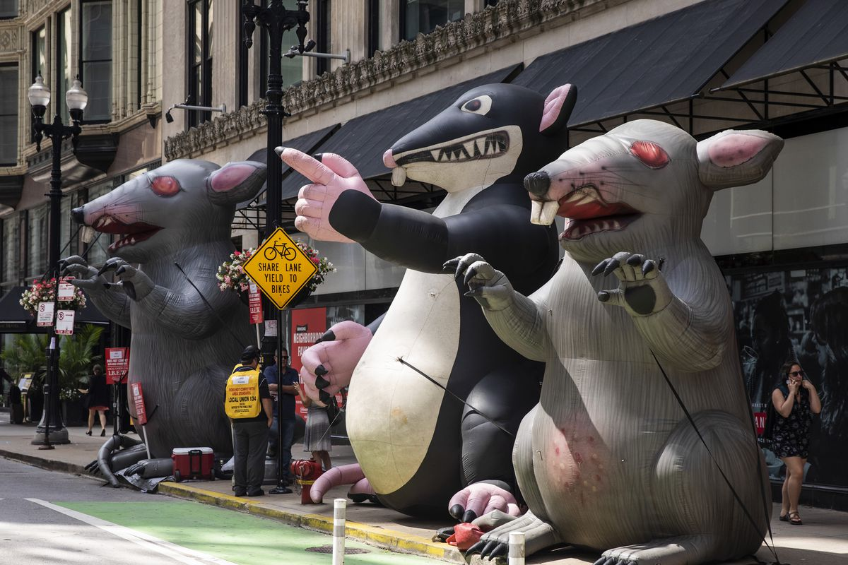 A fleet of rat balloons line Washington Street in the Loop during a 2019 picket by the International Brotherhood of Electrical Workers.