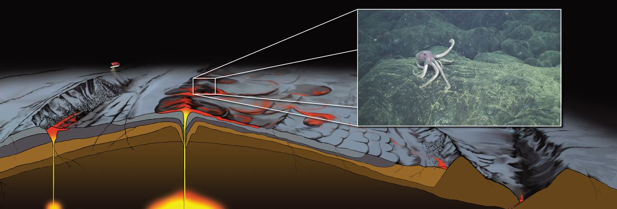 Illustration of one of the fast-spreading mid-ocean ridges that the researchers investigated (plus, an octopus.)