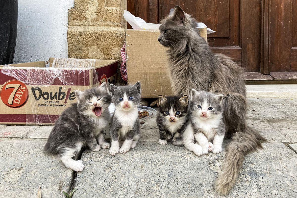 CYPRUS-ANIMAL-CATS