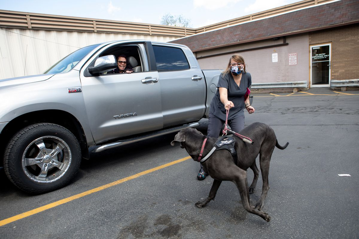 Tammy Reid laughs while getting out of her truck to help Savanah Hendershott, a vet technician, return Blue, her 1-year-old Great Dane, after a visit to Sugar House Veterinary Hospital in Salt Lake City on Thursday, May 21, 2020. The hospital is open to pets only amid the COVID-19 pandemic. Pet owners are asked to call the hospital and wait in the parking lot for a technician to walk their pets inside and return them after their appointment.