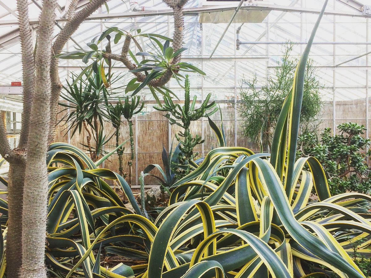 The interior of a greenhouse. The walls and ceiling are glass and there are many varied plants and trees.