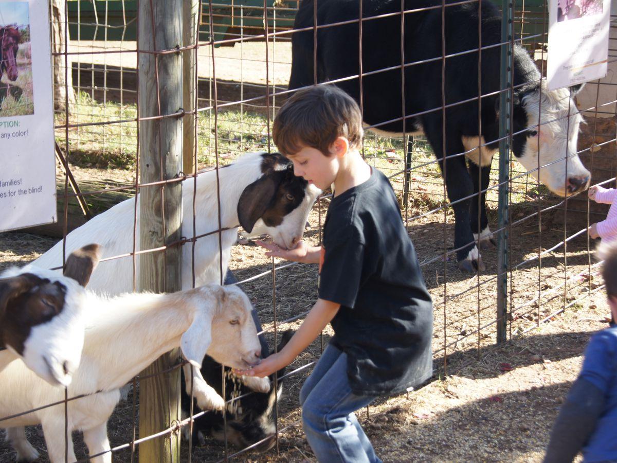 A child feeds a goat through a fence on a farm.
