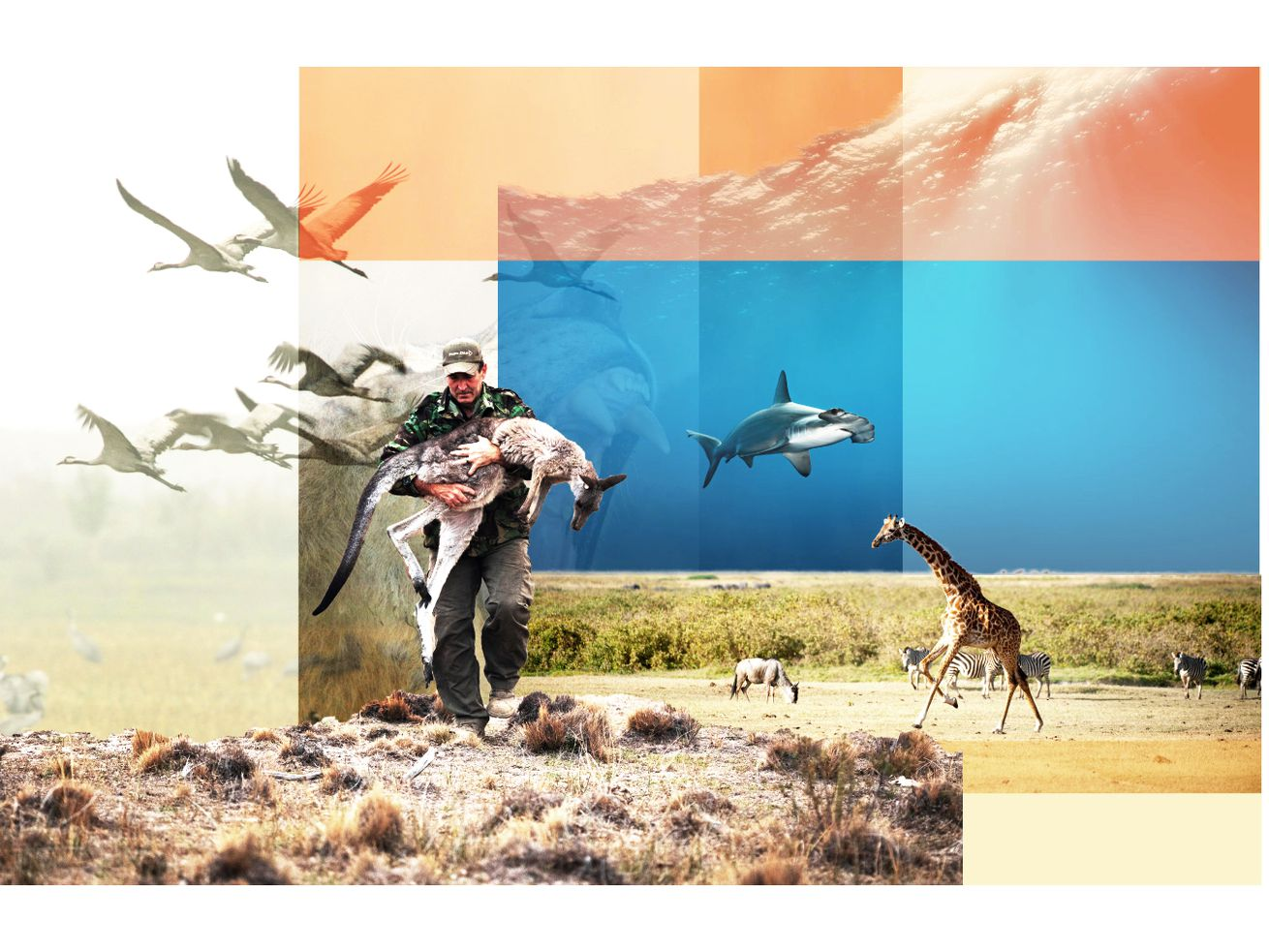 Photo illustration collage of wildlife surrounding a person carrying an injured animal.