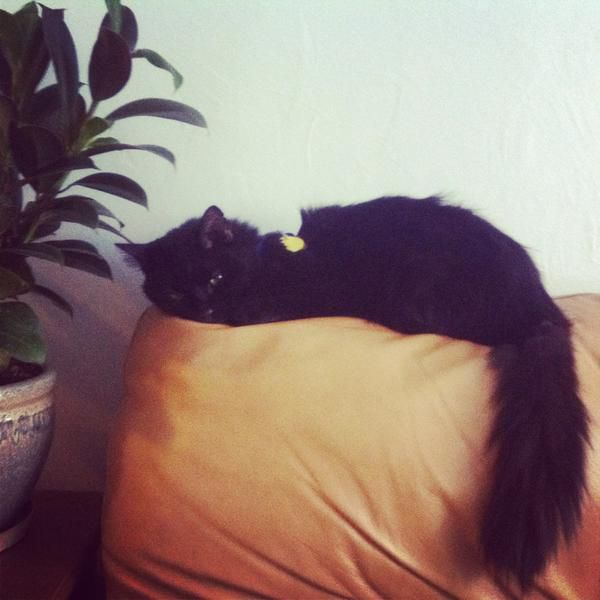Everything I know about a good death I learned from my cat
