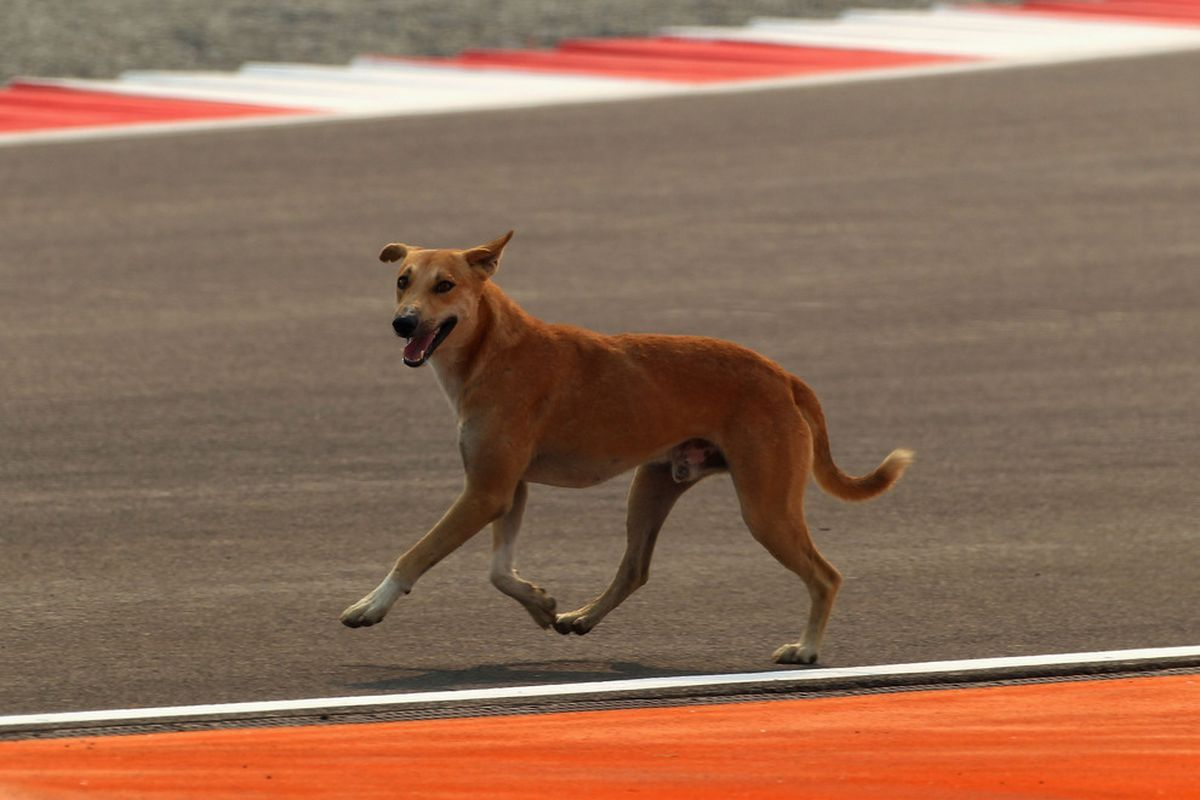 There are no photos from this game for some reason, so here's a nice doggy. (Photo by Clive Mason/Getty Images)