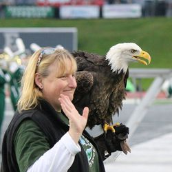 The Eagle after flying on the field.<br>