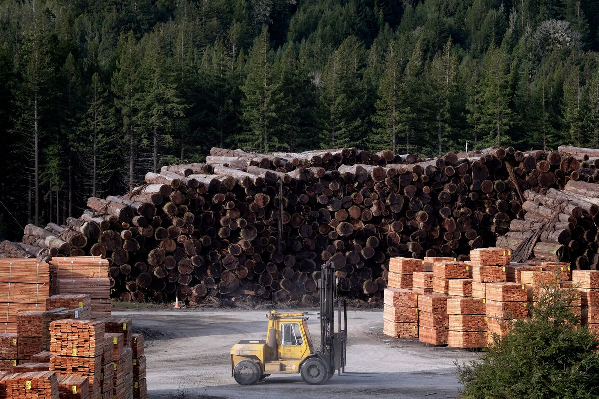 Stacks of lumber in Humboldt County, CA. The Trump Administration wants more logging to thin out California's forests to reduce the risks of massive wildfires.
