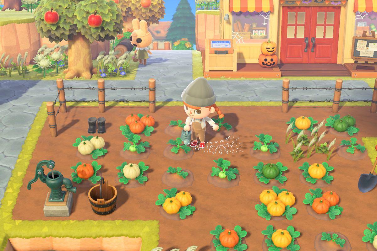 An Animal Crossing human watching a pumpkin patch