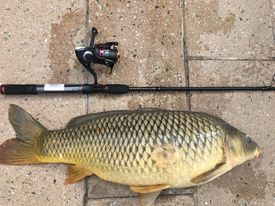 Jeffrey Williams' PB carp for the year from Chicago River. Provided
