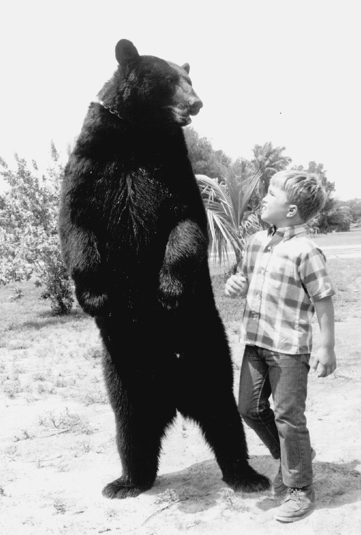 """Ben, the friendly black bear, and Clint Howard as his best buddy, on the TV series """"Gentle Ben."""""""
