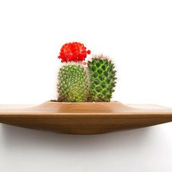 """Domenic Fiorello Wall Plant Pods at <b>Room 68</b>, <a href=""""http://www.room68online.com/collections/new/products/plantpods"""">$100</a> (Plants not included)"""