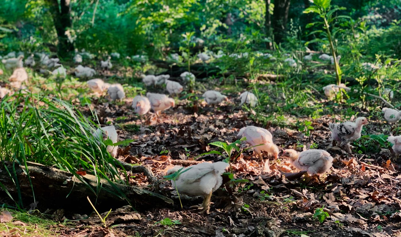 What's a Slower-Growing Chicken? - Eater